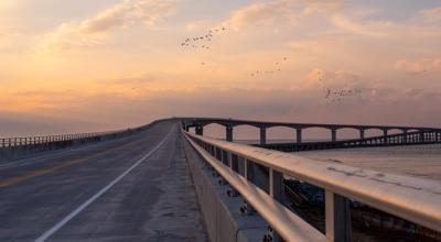 marc BASNIGHT BRIDGE