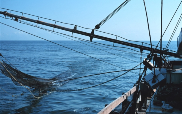 shrimp trawling